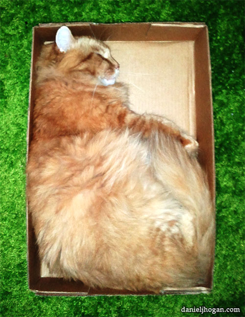 Photo of a cat sleeping in a box.