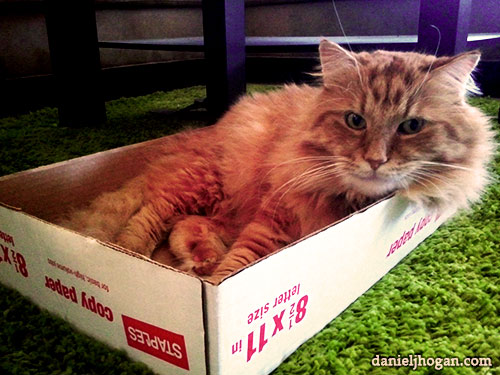 photo of a cat in a box.