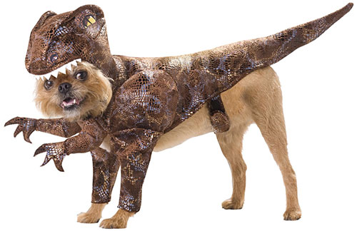 dog raptor halloween costume.