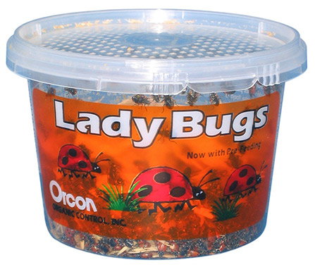 ladybugs for sale
