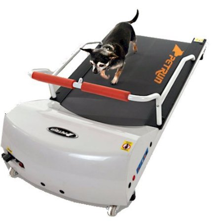 How To Train Your Dog To Run On A Treadmill